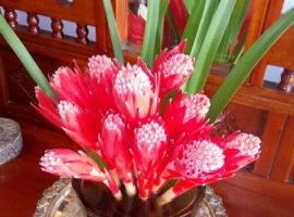 Flowers (Bromeliad)from the garden